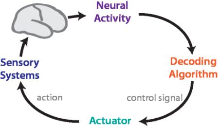 the BMI loop