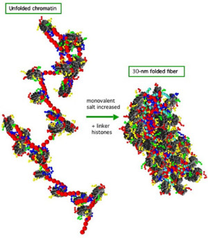 hpc08-chromatin_fig2_500