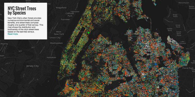 Jill Hubley's interactive street tree map