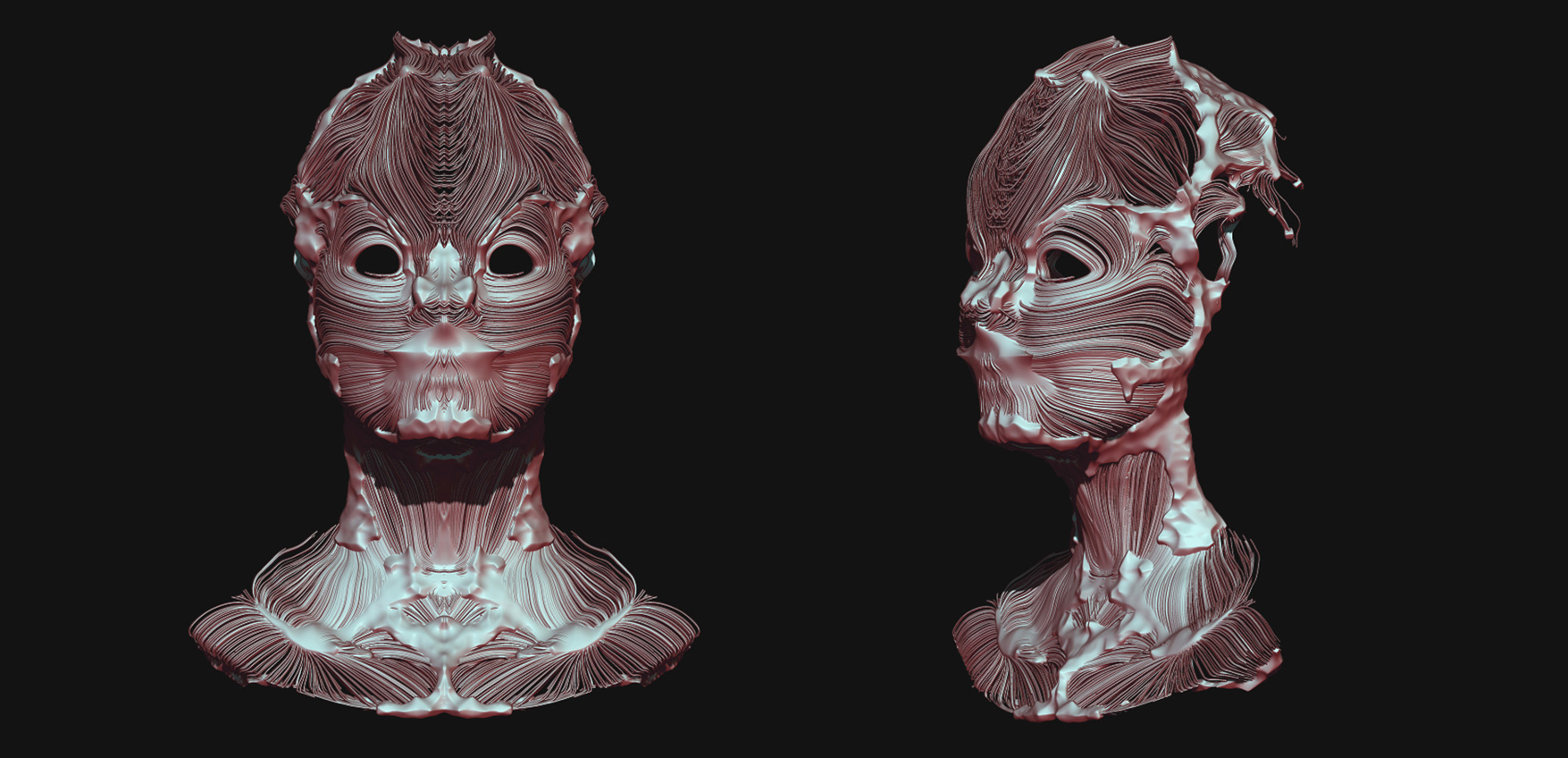 3D rendering of masks in muscle fiber