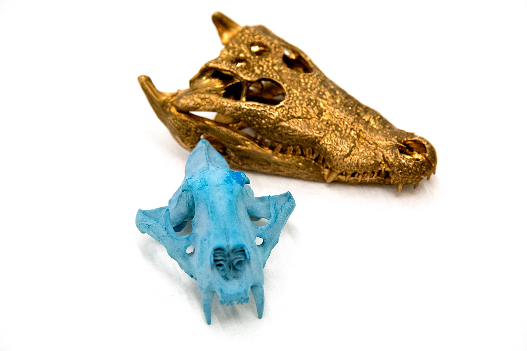 A 3D printed animal skull in wax and a cast metal alligator skull