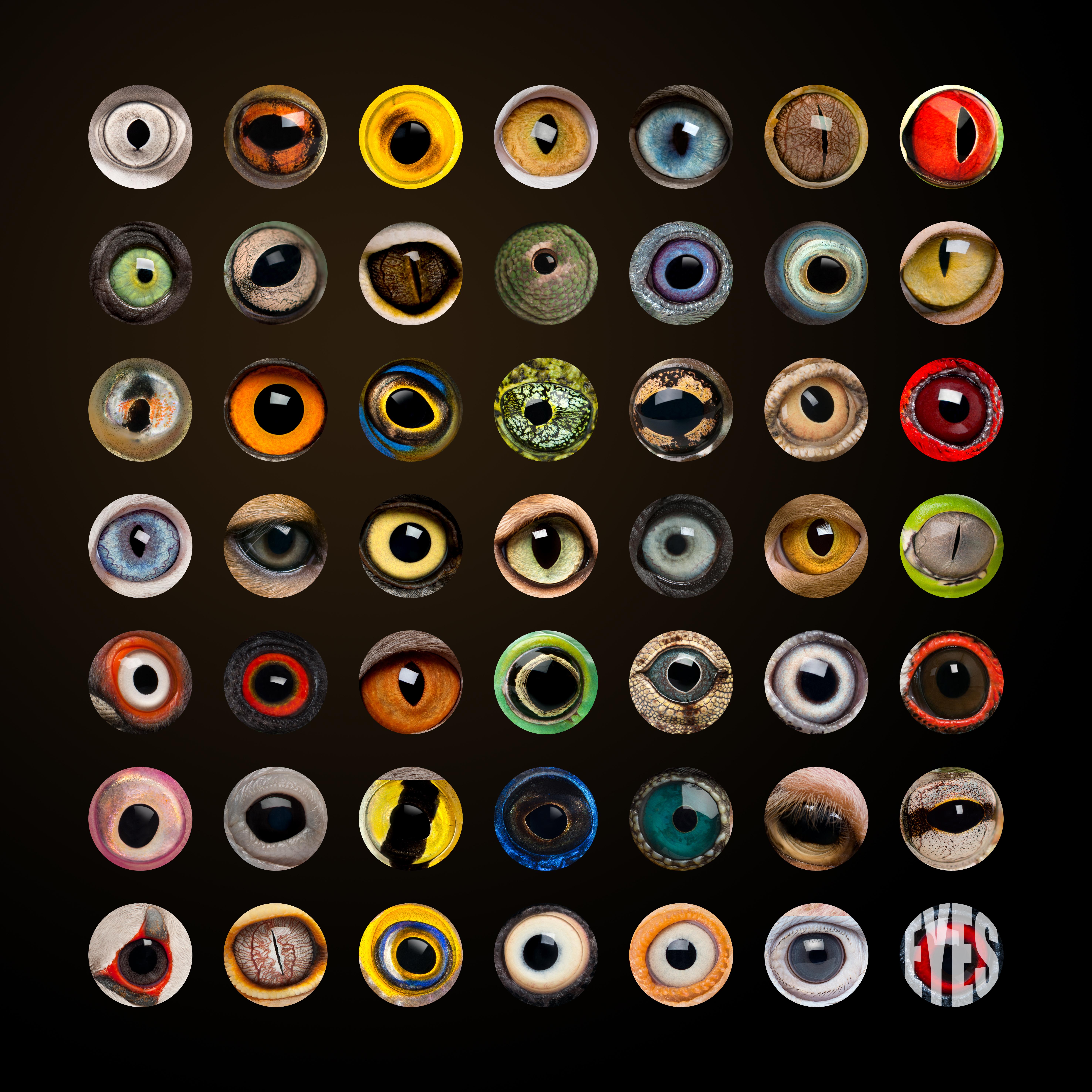 Animal Eyes Poster
