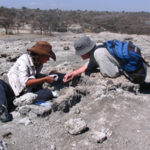 Examination of surface finds in the field at Laetoli