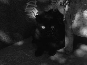 Couro de Gato
