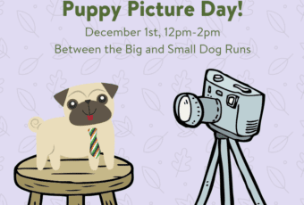 December 1: Puppy Picture Day