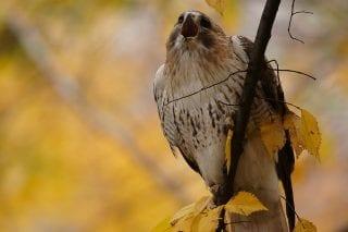 November 28: Wild NYC