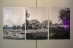 Triptych of landscape in black and white