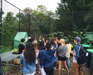 Class field trip to a community garden in Rose Bay.