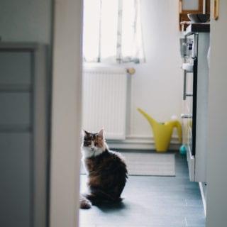 Gato sentado en el suelo de una cocina, observando algo que no vemos