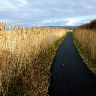 Canal atravesando una plantación de trigo