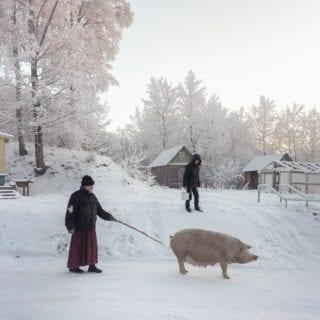 Hombre paseando a un cerdo en la nieve