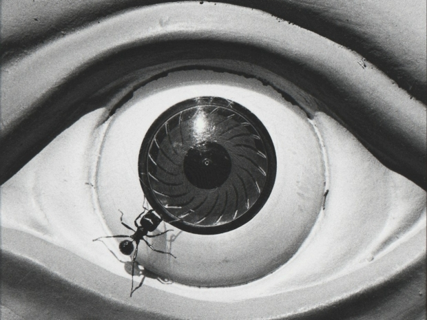 Photo: David Wojnarowicz work depicting sculpture of open eye with ant crawling on the eyeball.