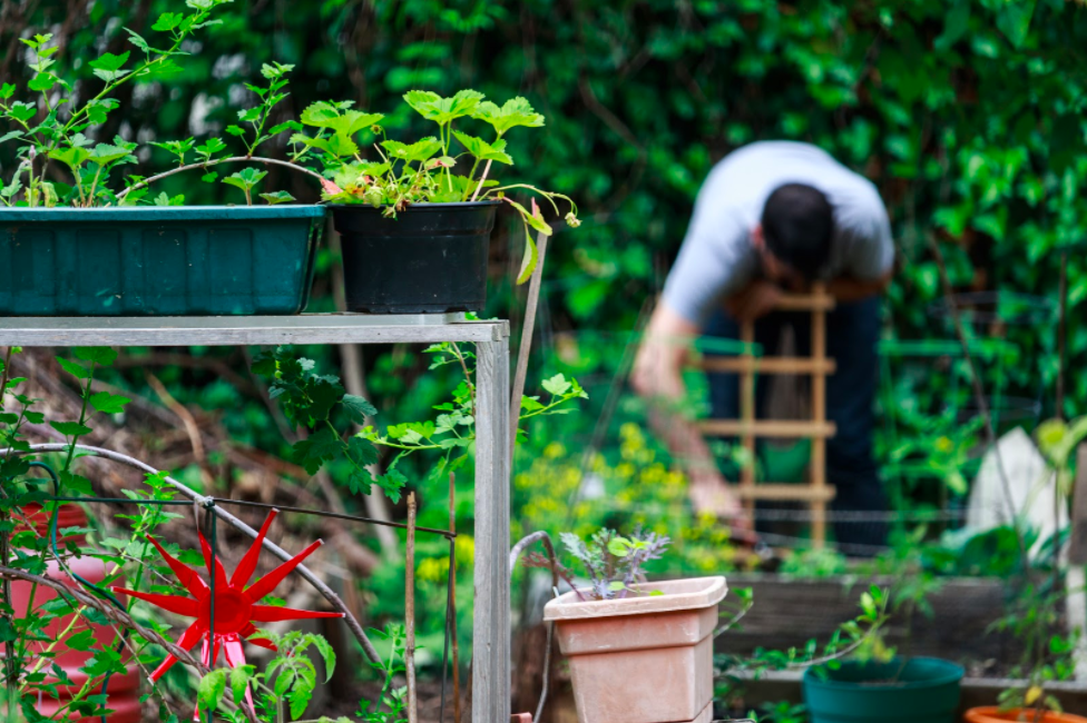 person working in a lush garden