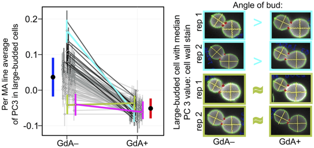 Figure from Geiler-Samerotte et al., 2016
