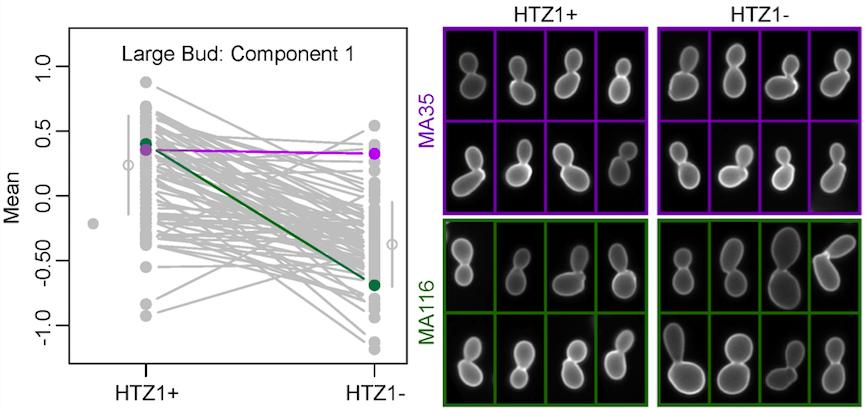 Figure from Richardson et al., 2013