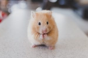 """CALA Writing Instructor Publishes Essay: """"What a rodent taught me about love—yes, love"""""""
