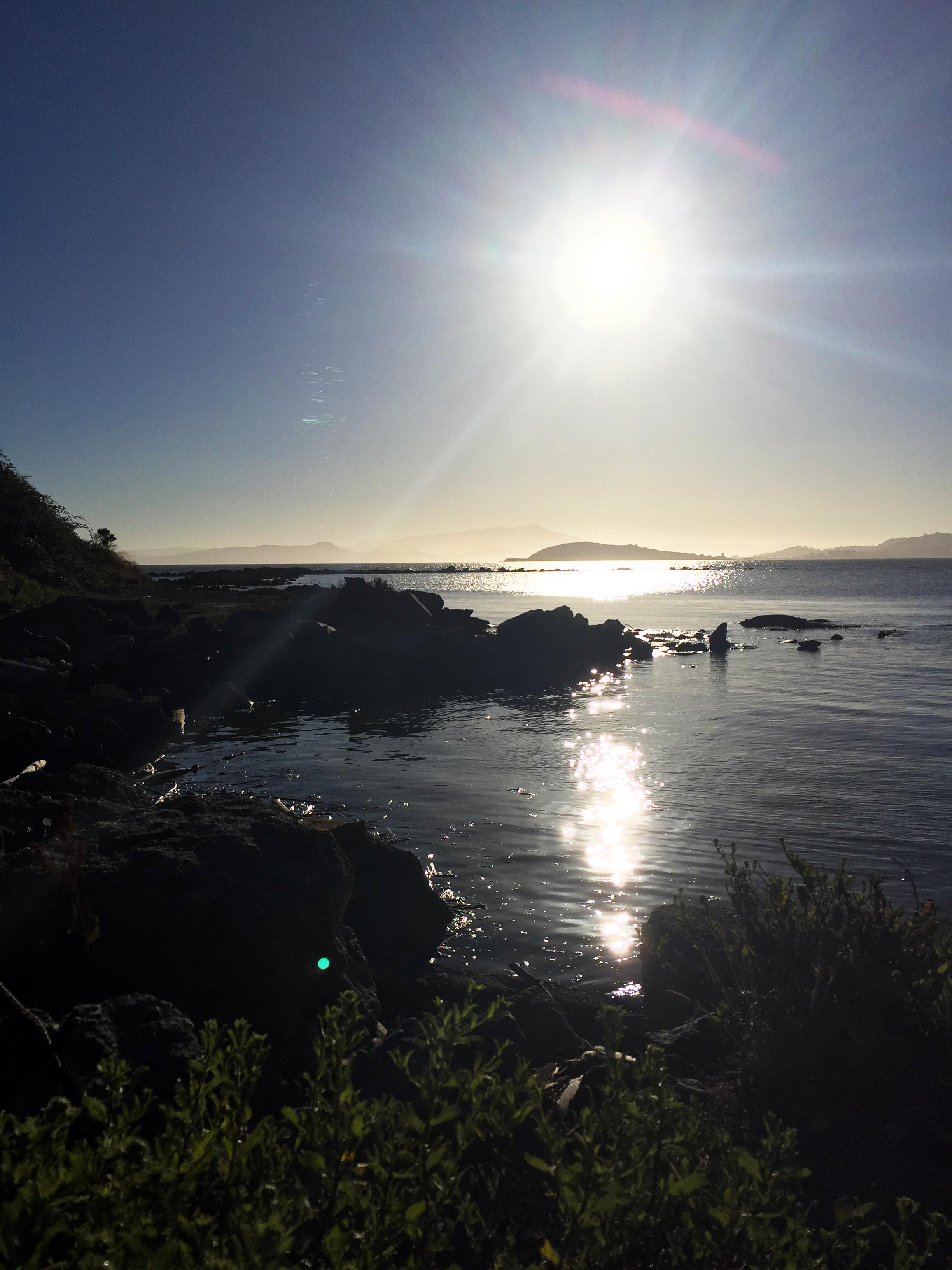 San Francisco Bay, taken at McLaughlin Eastshore State Park on7.20.17