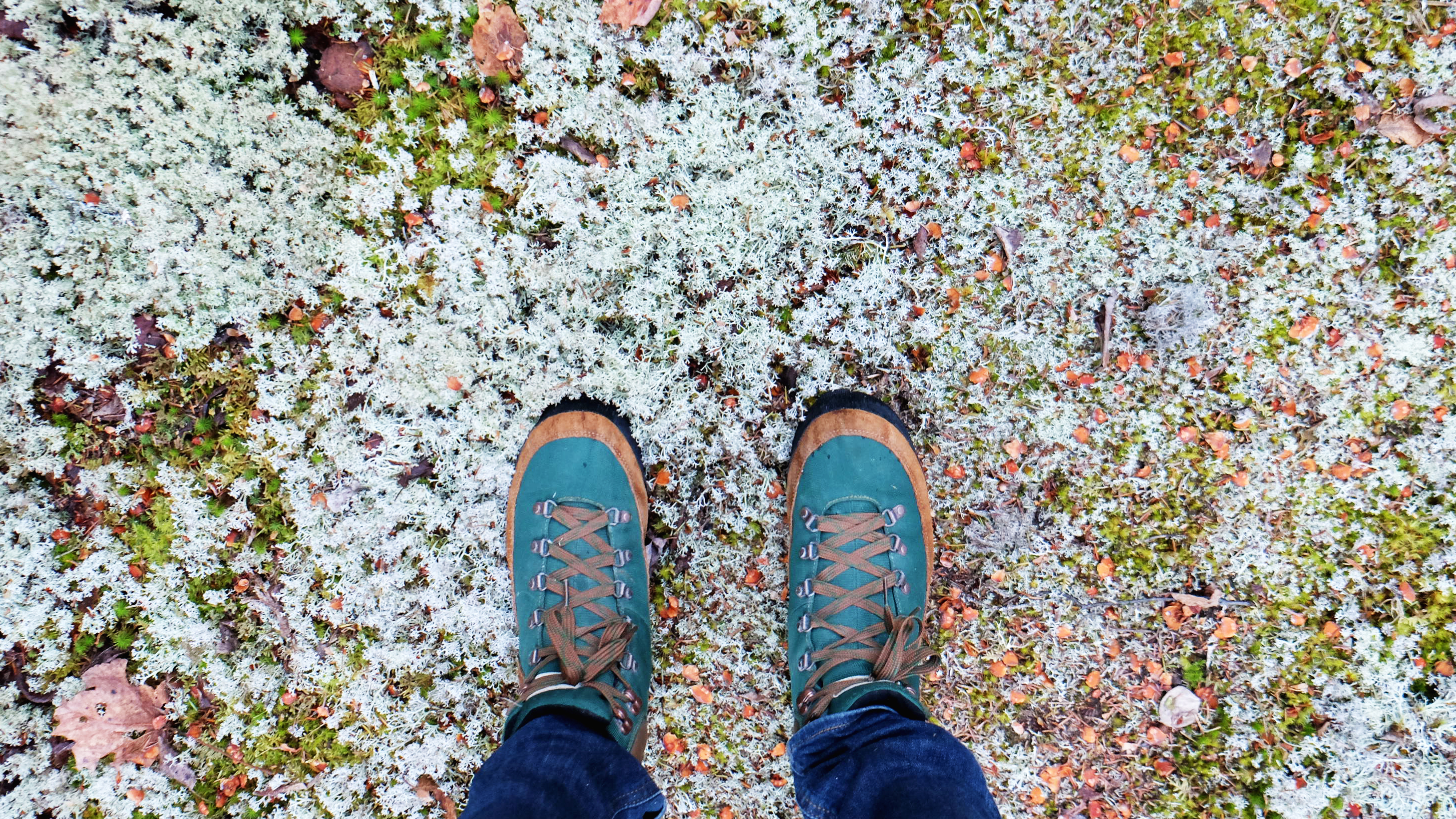 boots in colorful moss