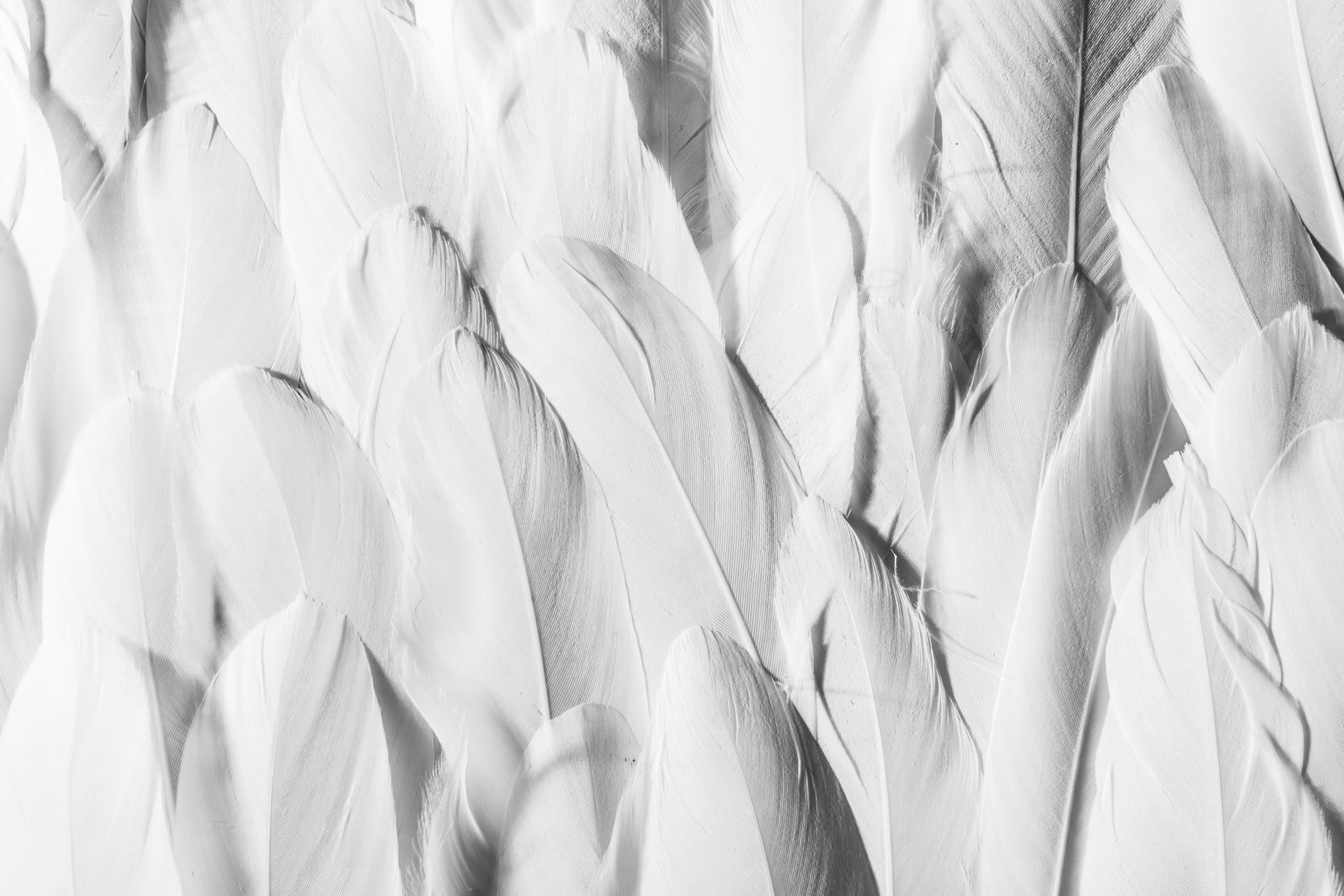 closeup of white feathers