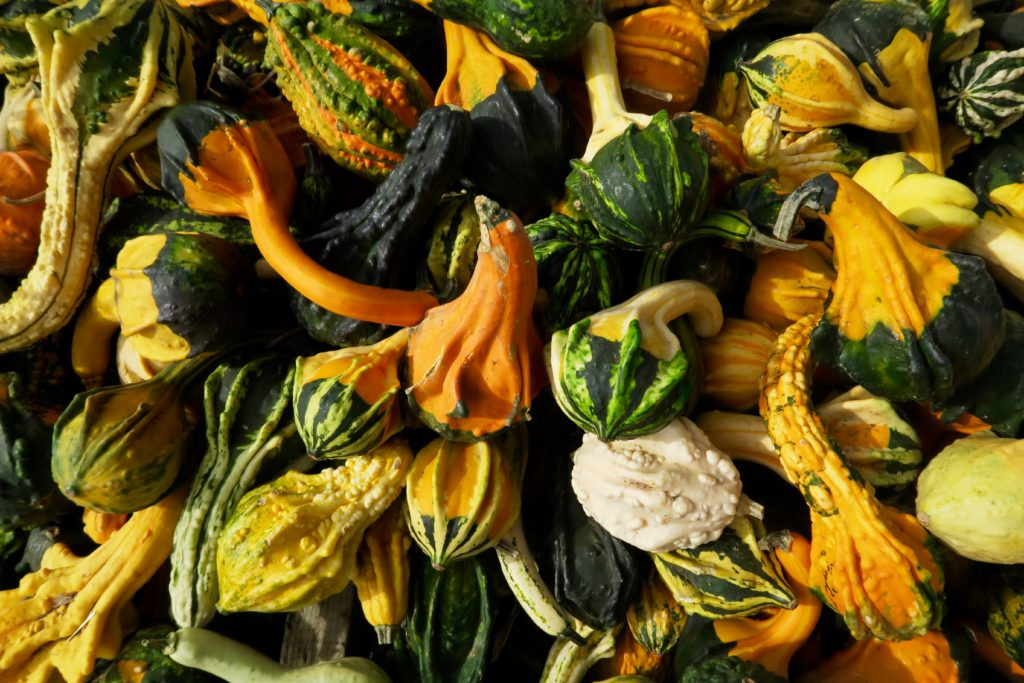 photo of gourds